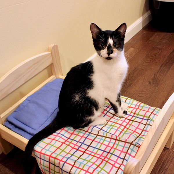 Wayward Whiskers Cat Rescue Home