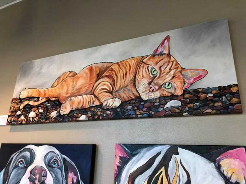 Wayward Whiskers Cat Rescue News Amp Events